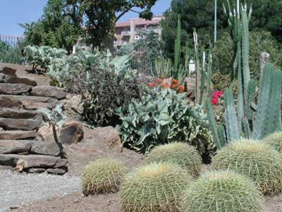 """""""VI Feria de Cactus y Otras Plantas de Colección""""."""